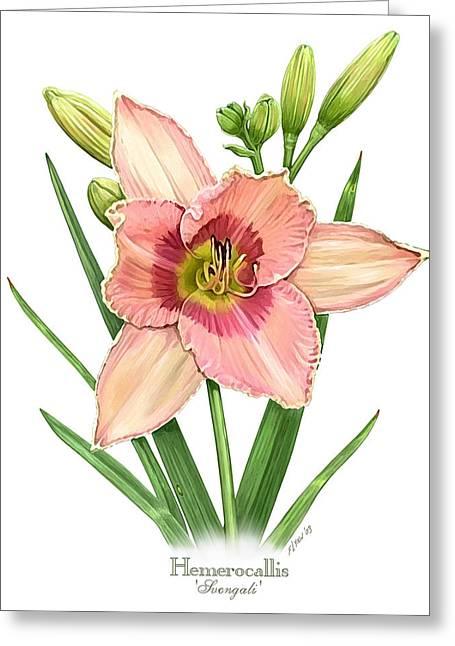 Daylily Svengali  Greeting Card