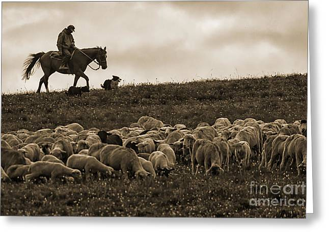 Days End Sheep Herding Greeting Card