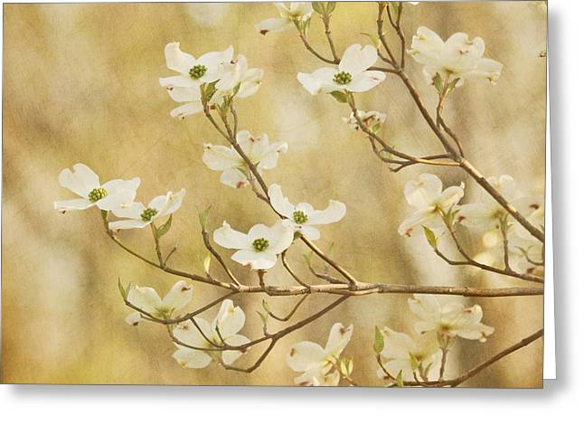 Days Of Dogwoods Greeting Card