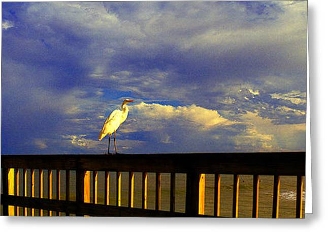 Daytona Beach Fl Bird Sun Glow Pier  Greeting Card