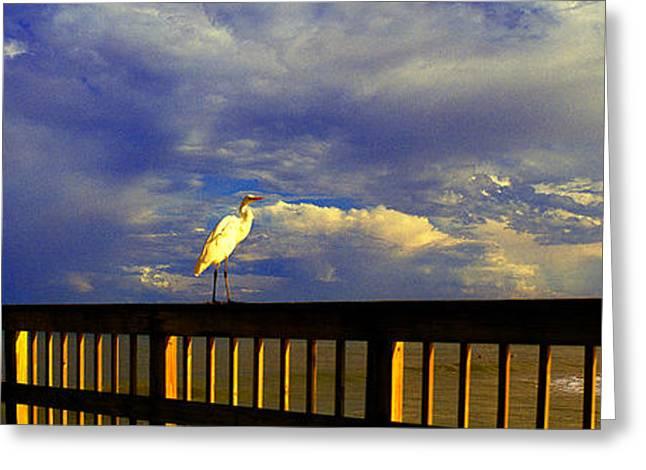 Daytona Beach Rail Bird Sun Glow Pier  Greeting Card