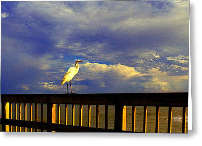 Daytona Beach Rail Bird Sun Glow Pier  Greeting Card