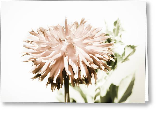Greeting Card featuring the photograph Dazzling Dahlia by Sherri Meyer