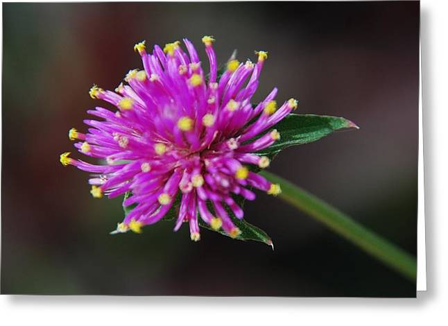 Greeting Card featuring the photograph Dbg 050812-1779 by Tam Ryan