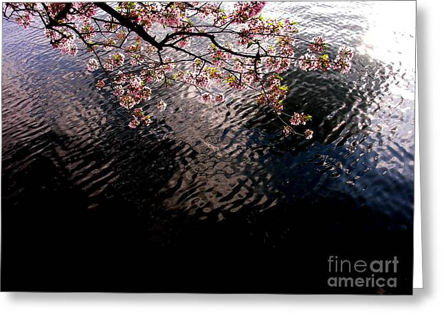 Dc Cherry And Black Greeting Card by Jacqueline M Lewis