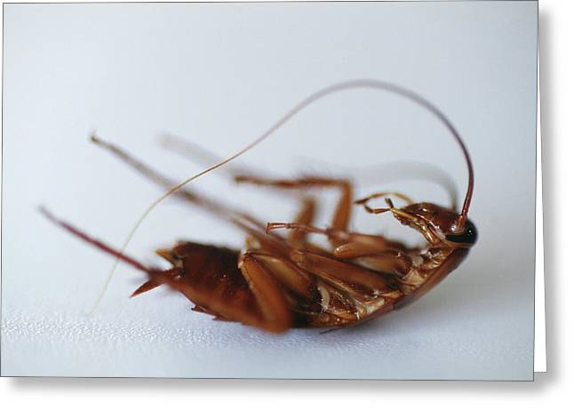 Dead Cockroach Greeting Card