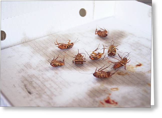 Dead Cockroaches Greeting Card
