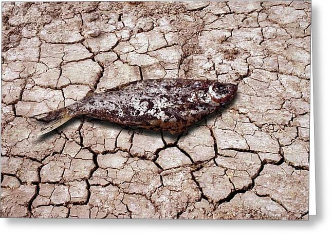 Dead Fish On Cracked Earth Greeting Card