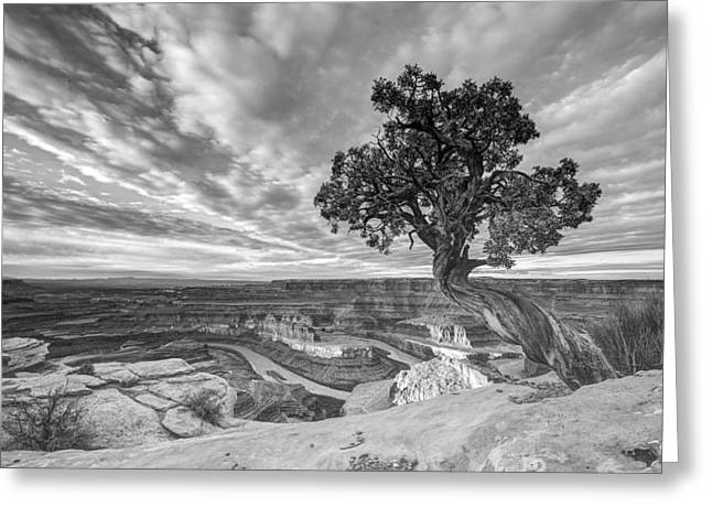 Dead Horse Point Sunrise In Black And White Greeting Card by Dustin  LeFevre