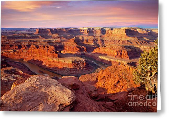 Dead Horse Point Greeting Cards - Dead Horse Point View Greeting Card by Brian Jannsen