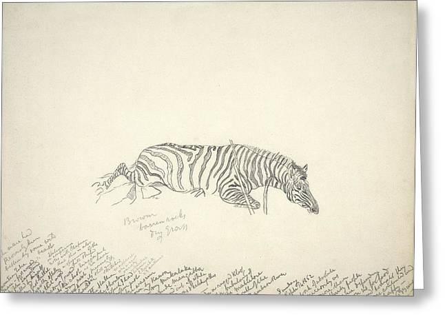 Dead Mountain Zebra, Artwork Greeting Card