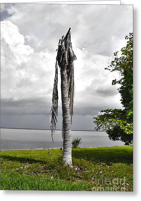 Greeting Card featuring the photograph Dead Palm by Timothy Lowry