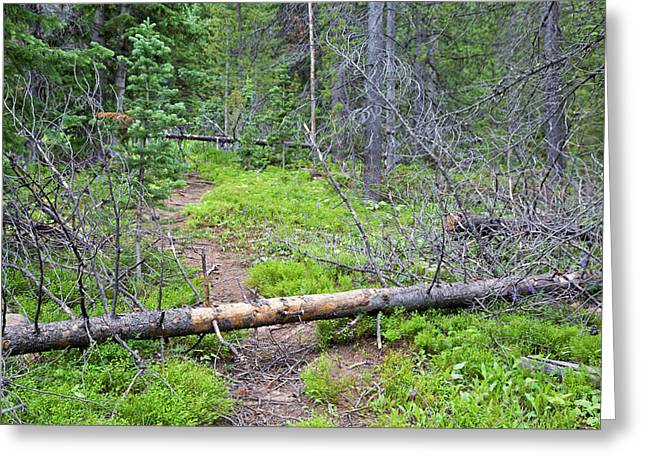 Dead Pine Trees Blocking A Hiking Trail Greeting Card by Jim West