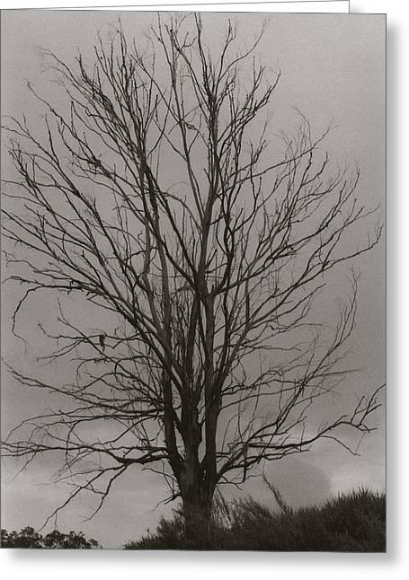 Greeting Card featuring the photograph Dead Tree by Amarildo Correa