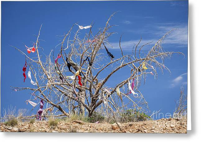 Dead Tree Covered In Womens Bras Greeting Card