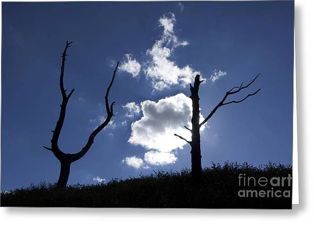 Dead Tree In Backlighting Greeting Card by Bernard Jaubert