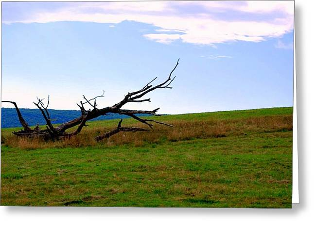 Greeting Card featuring the photograph Dead Tree by Mary Beth Landis