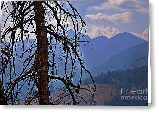 Greeting Card featuring the photograph Dead Tree Mountains Landscape by Valerie Garner