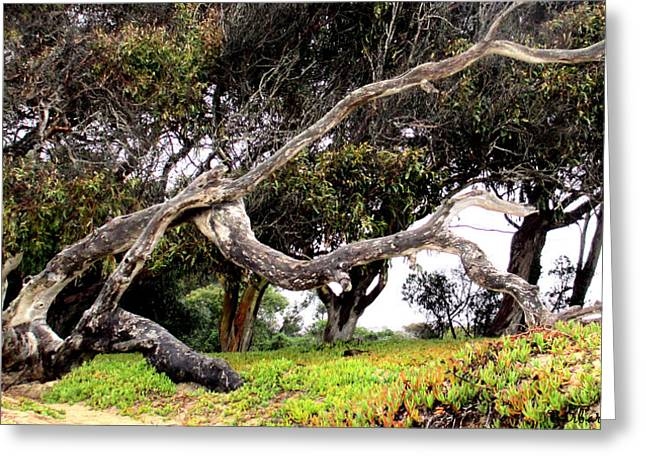 Dead Tree Walking Greeting Card by Barbara Snyder