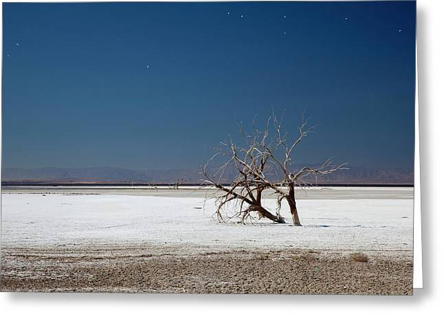 Dead Trees On Salt Flat Greeting Card