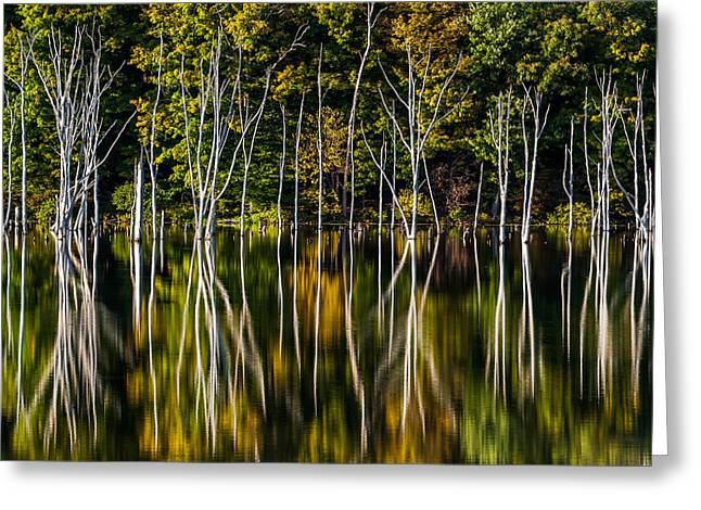 Greeting Card featuring the photograph Deadwood by Mihai Andritoiu