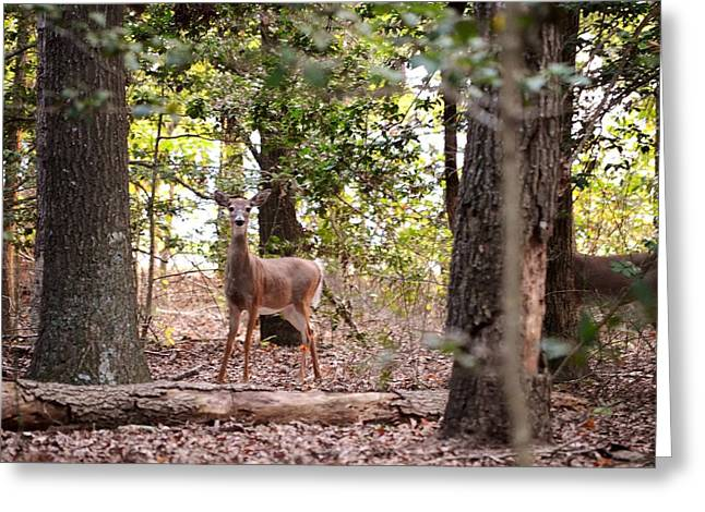 Deer At James Farm Ecological Preserve 2 - Delaware Greeting Card by Kim Bemis