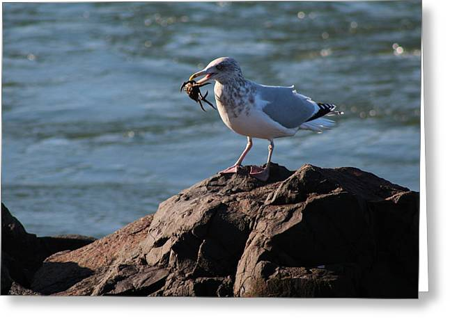Death By Seagull Greeting Card by Nance Larson