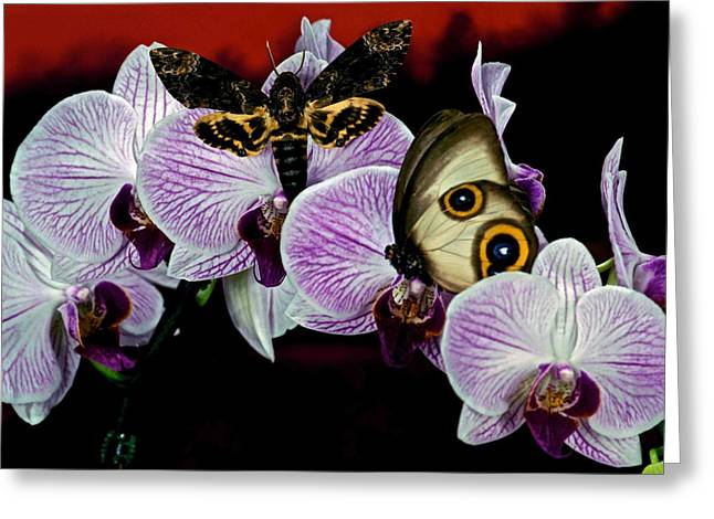 Death Heads Moth Meets Silky Owl Butterfly On Orchid Flower Greeting Card by Leslie Crotty