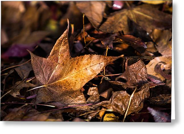 Death Of Autumn Greeting Card by Mark Lucey