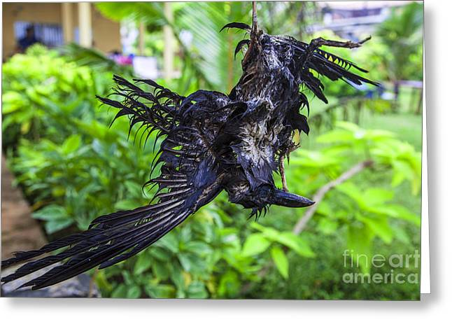 Death Raven Hanging In The Rope Greeting Card by Gina Koch