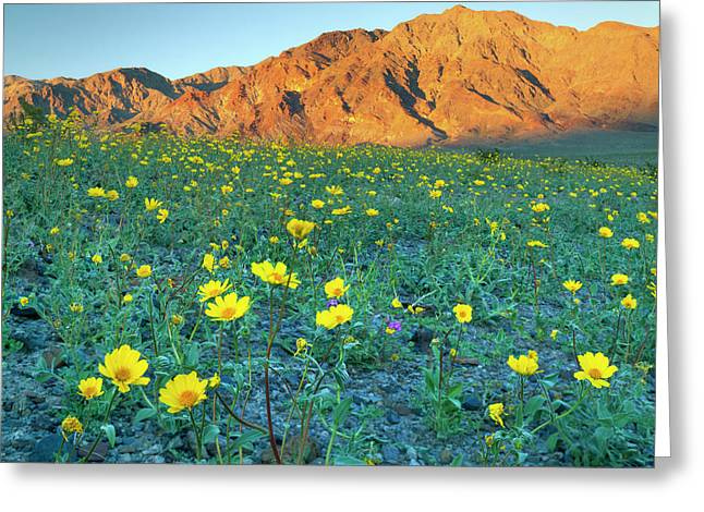 Death Valley National Park, California Greeting Card