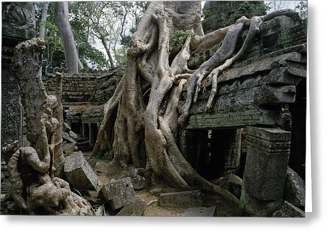 Decay At Ta Prohm Greeting Card by Shaun Higson