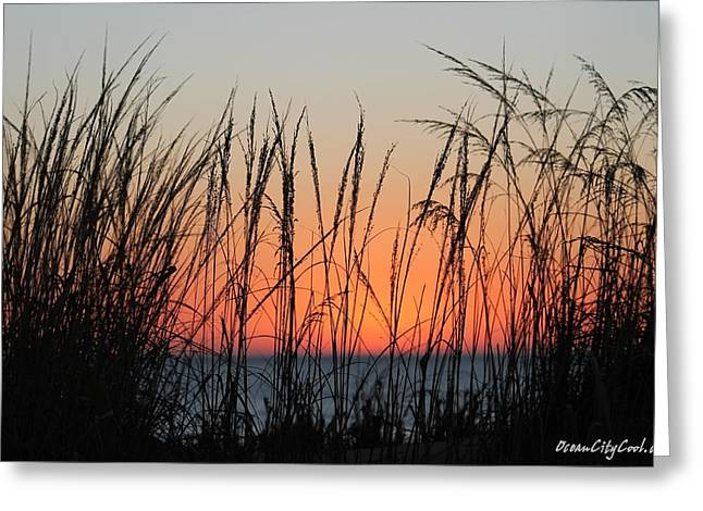 December Dawn Greeting Card