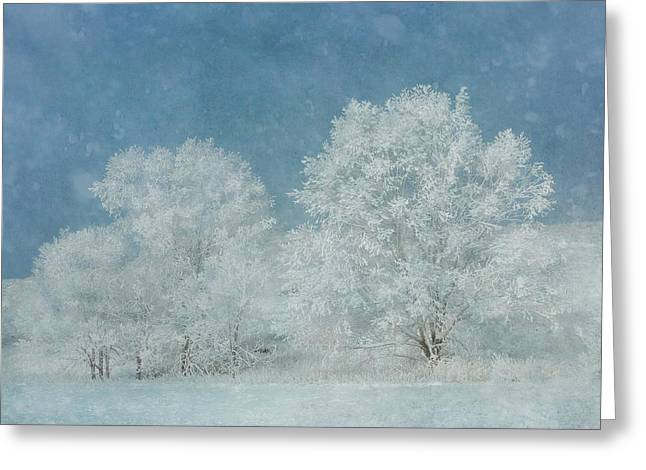 December Frost Greeting Card by Gigi Embrechts