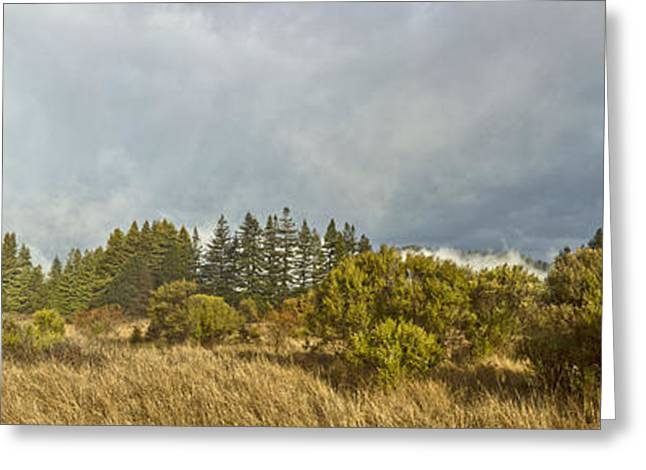 December Henry Cowell Sunrise Panorama Greeting Card by Larry Darnell