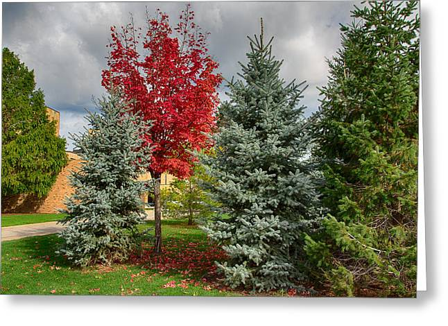 Deciduous And Evergreens Greeting Card