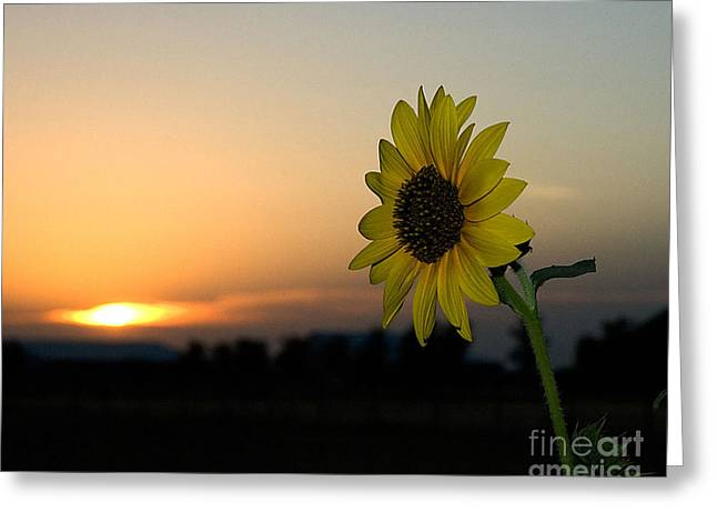 Greeting Card featuring the photograph Sunflower And Sunset by Mae Wertz