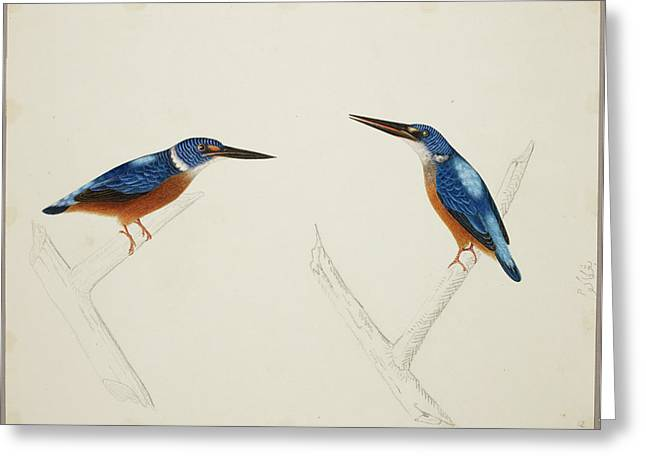 Deep Blue Kingfisher Greeting Card by British Library