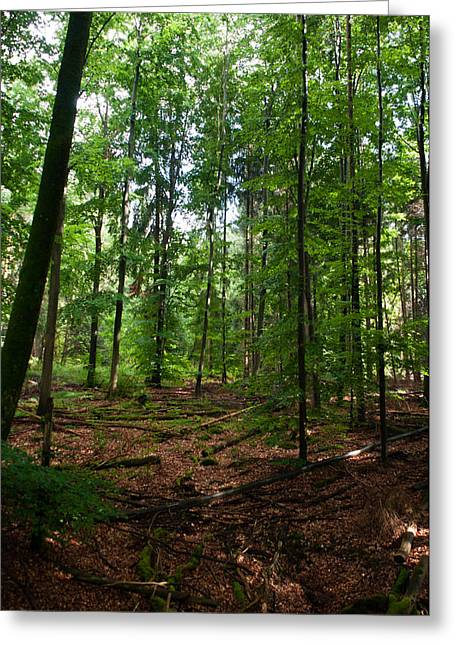 Deep Forest Trails Greeting Card