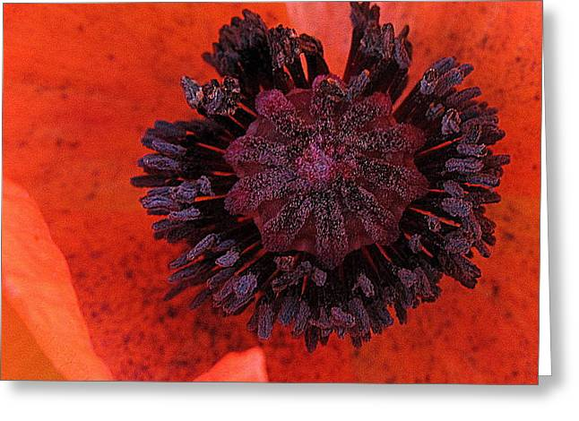 Greeting Card featuring the photograph Deep In Bloom by Suzy Piatt