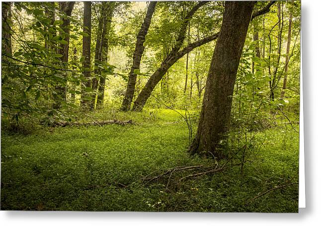 Deep In The Woods Greeting Card by Cindy Rubin