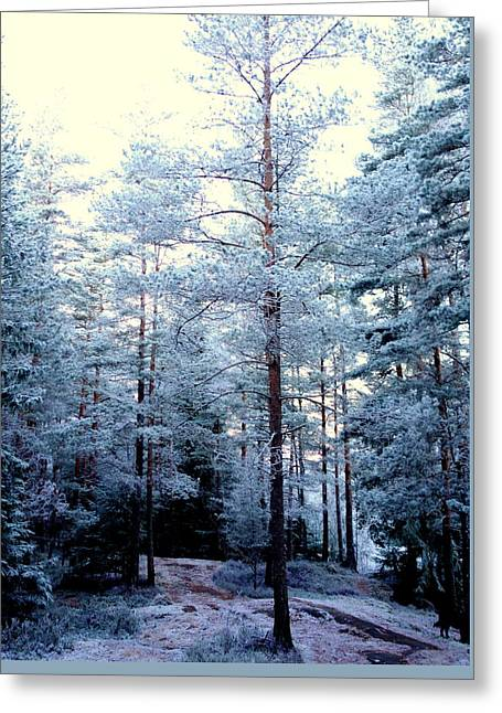 You Can Walk Deep Into The Soul Of The Forest And Find Yourself  Greeting Card