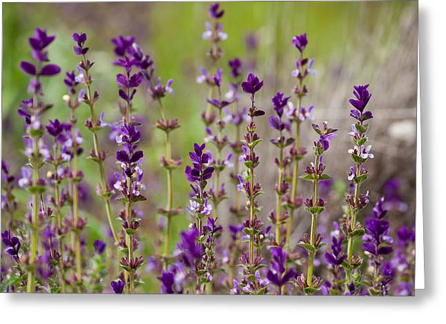 Greeting Card featuring the photograph Deep Purple by Uri Baruch