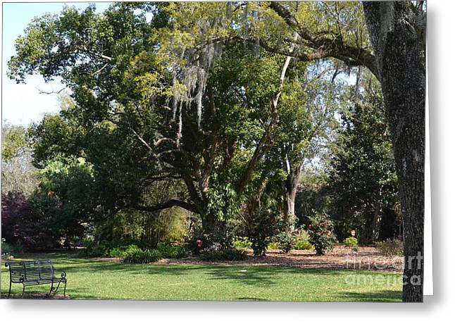 Greeting Card featuring the photograph Deep South Scenery by Carol  Bradley