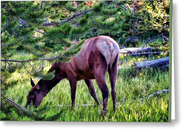 Greeting Card featuring the photograph Deer 7 by Dawn Eshelman