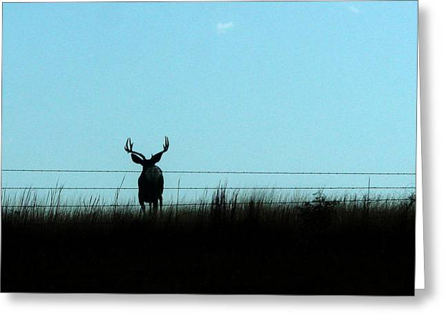 Greeting Card featuring the photograph Ohhhh Deer by Shirley Heier