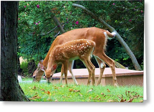 Deer And Fawn Greeting Card by Adam L