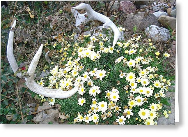 Greeting Card featuring the photograph Deer Antler Two by J L Zarek