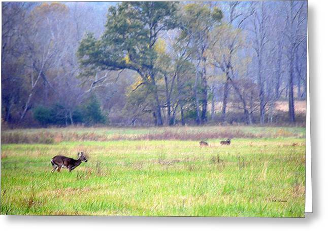 Deer At Cades Cove Greeting Card by Kenny Francis