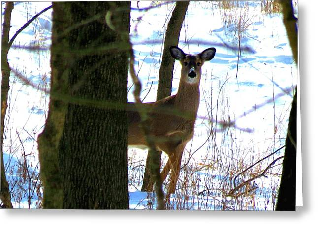 Deer At Park Greeting Card by Eric Switzer